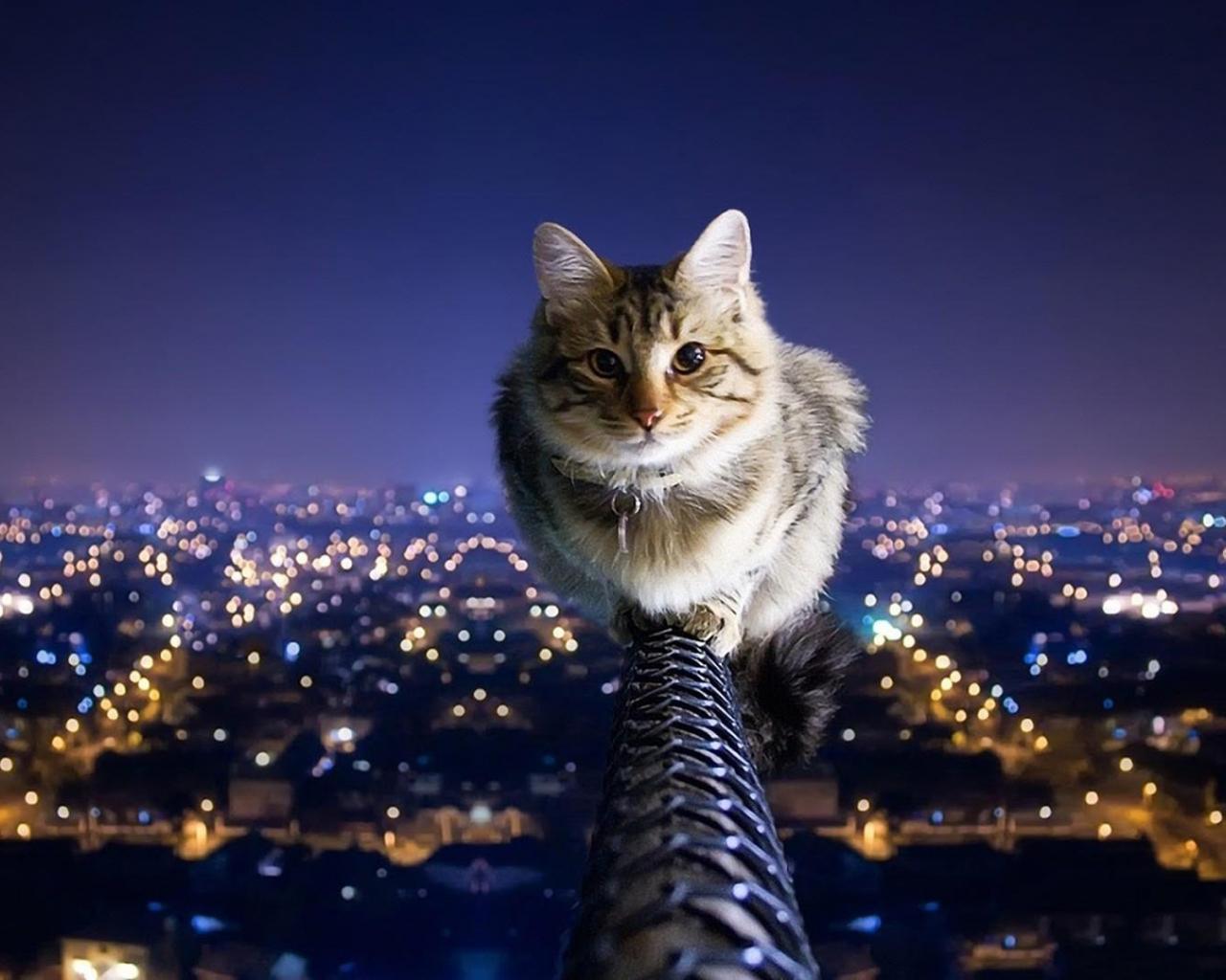Free download Cat Animal Windows 10 Wallpaper 1080p ...