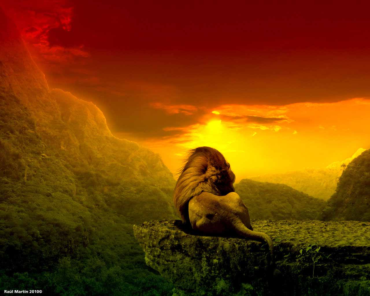 Rasta Lion Wallpapers By Zedge
