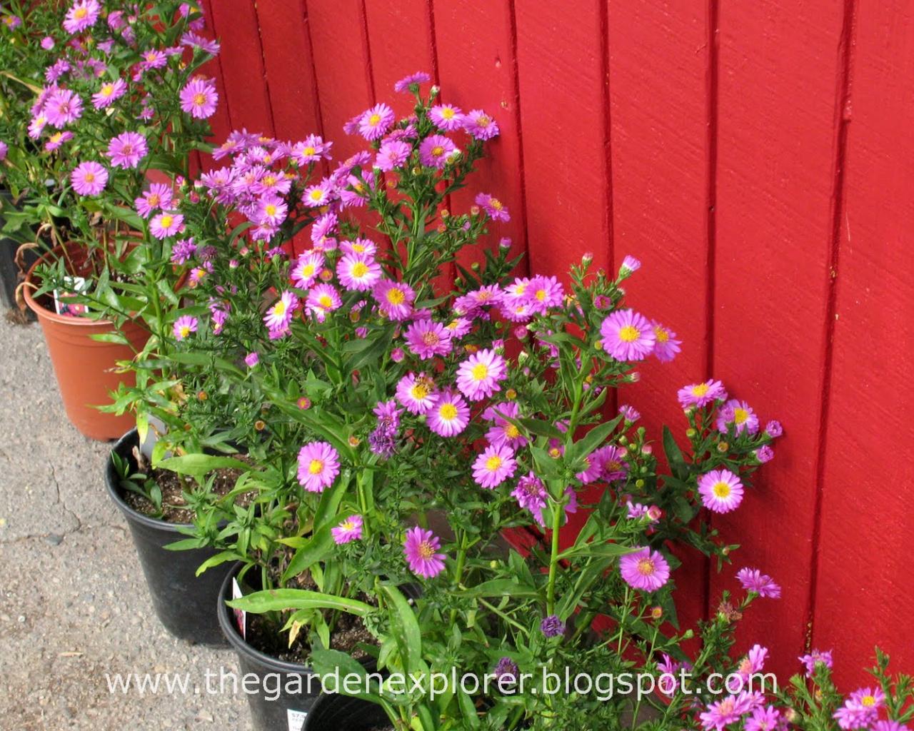 1600x1067px beautiful fall flowers wallpaper wallpapersafari beautiful fall flowers pictures 1600x1067 download resolutions desktop 1600x900 1536x864 1440x900 1366x768 izmirmasajfo