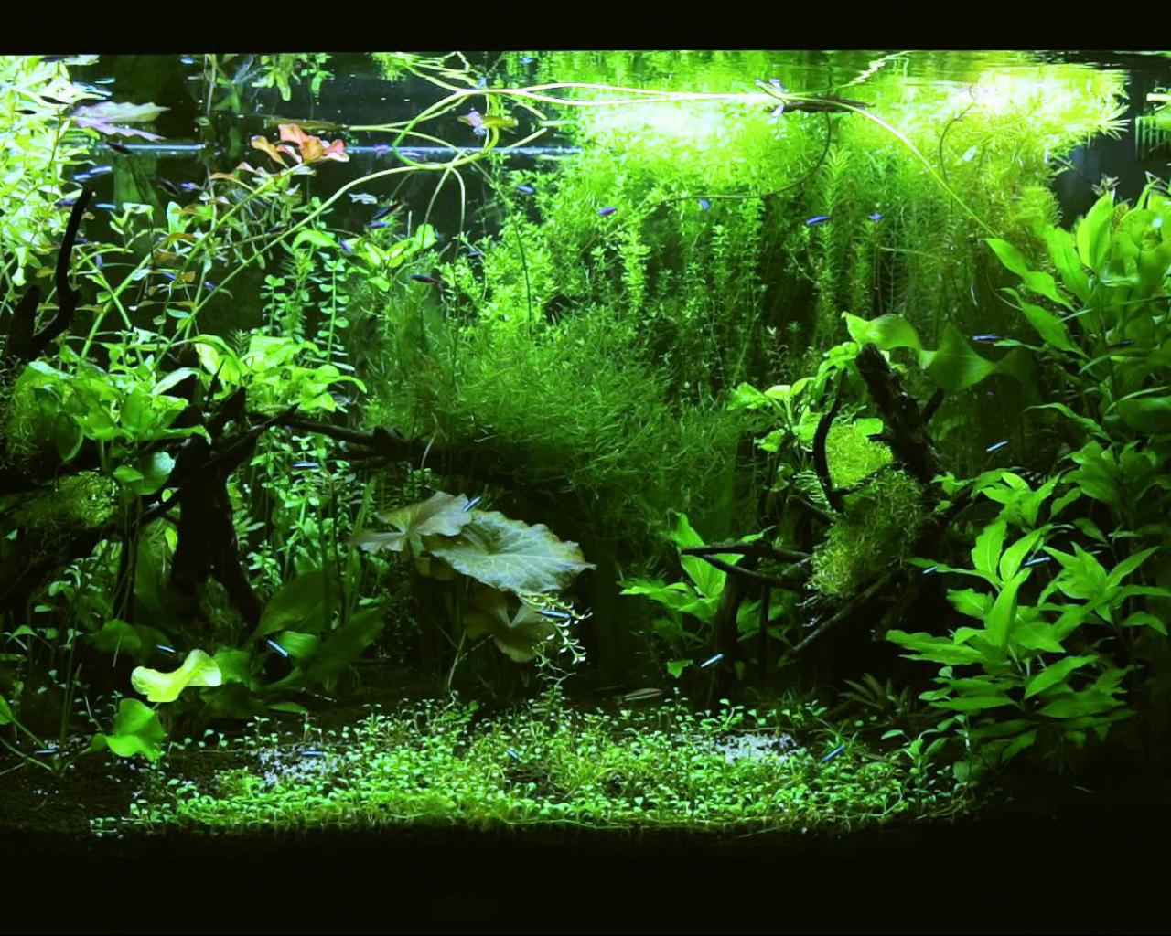 Free Download Hd Tv Aquarium Tetra Jungle 1080p 1920x1080 For Your Desktop Mobile Tablet Explore 47 Aquarium Hd 1080p Wallpaper Abstract Hd Wallpapers 1080p Wallpapers Hd 1080p Full Cool