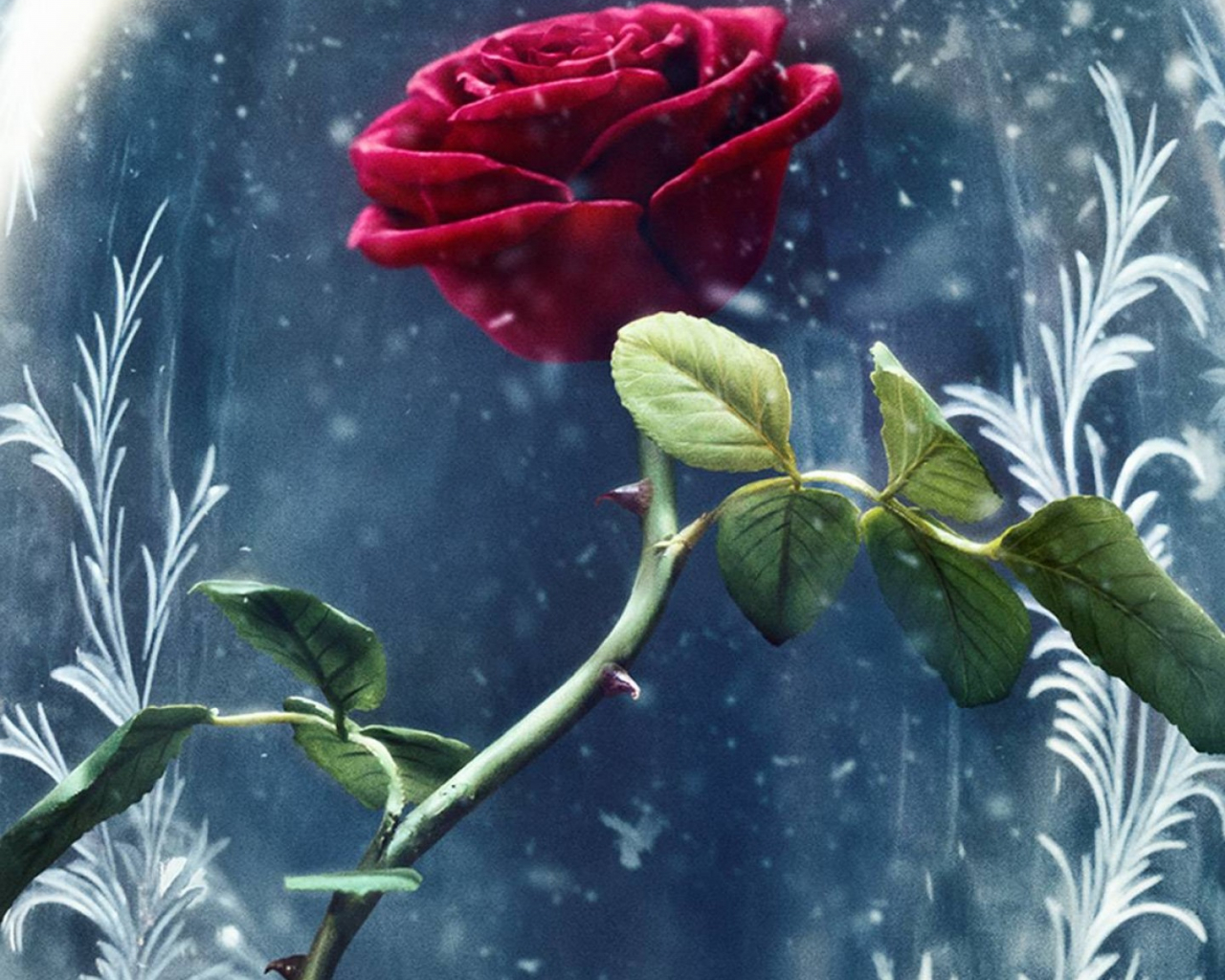 Free Download Wallpaper Beauty And The Beast Rose Red Best Movies Movies 11557 1440x2560 For Your Desktop Mobile Tablet Explore 24 Beauty And The Beast Rose Wallpapers Beauty And