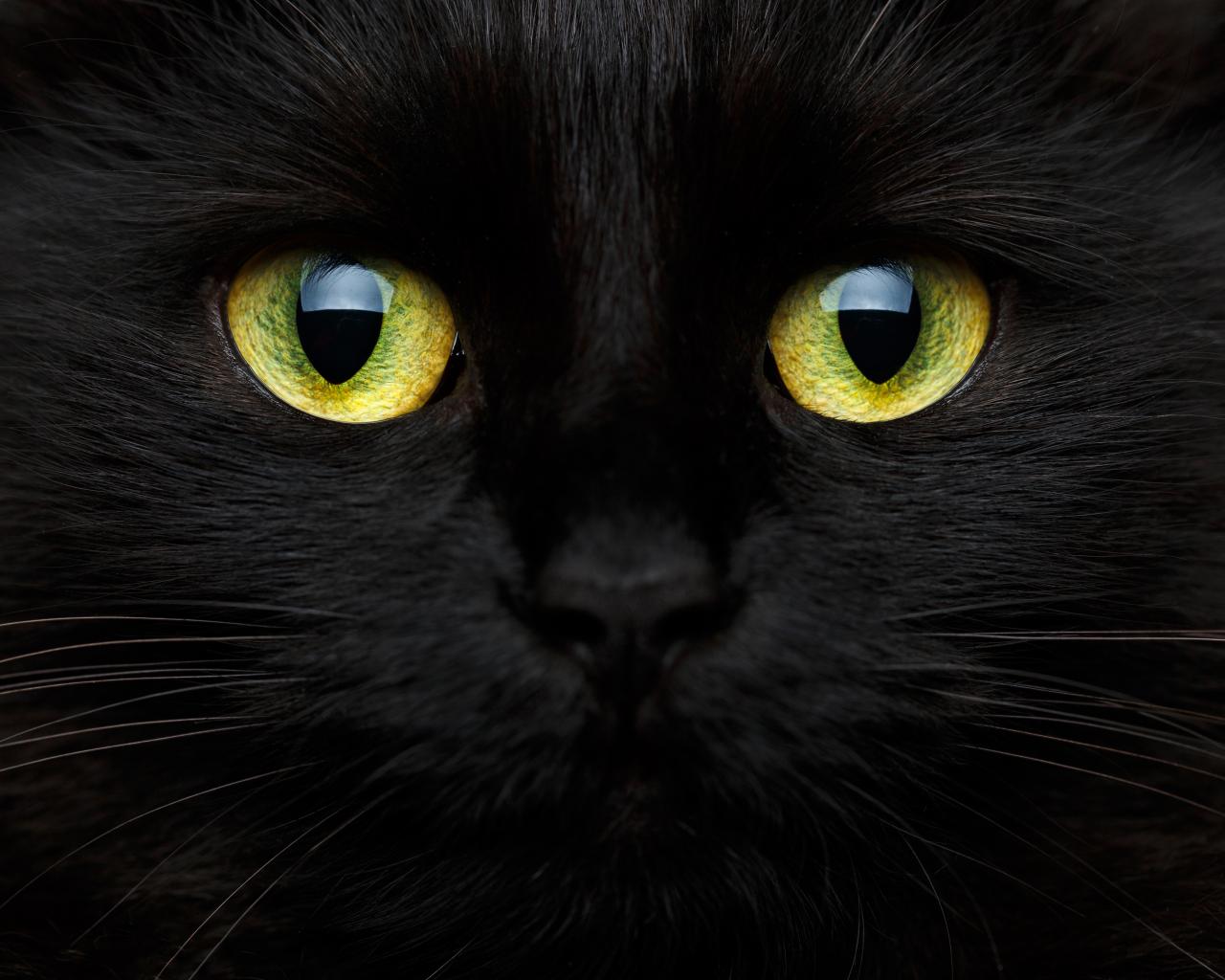 Cat bosanski video Prije nego