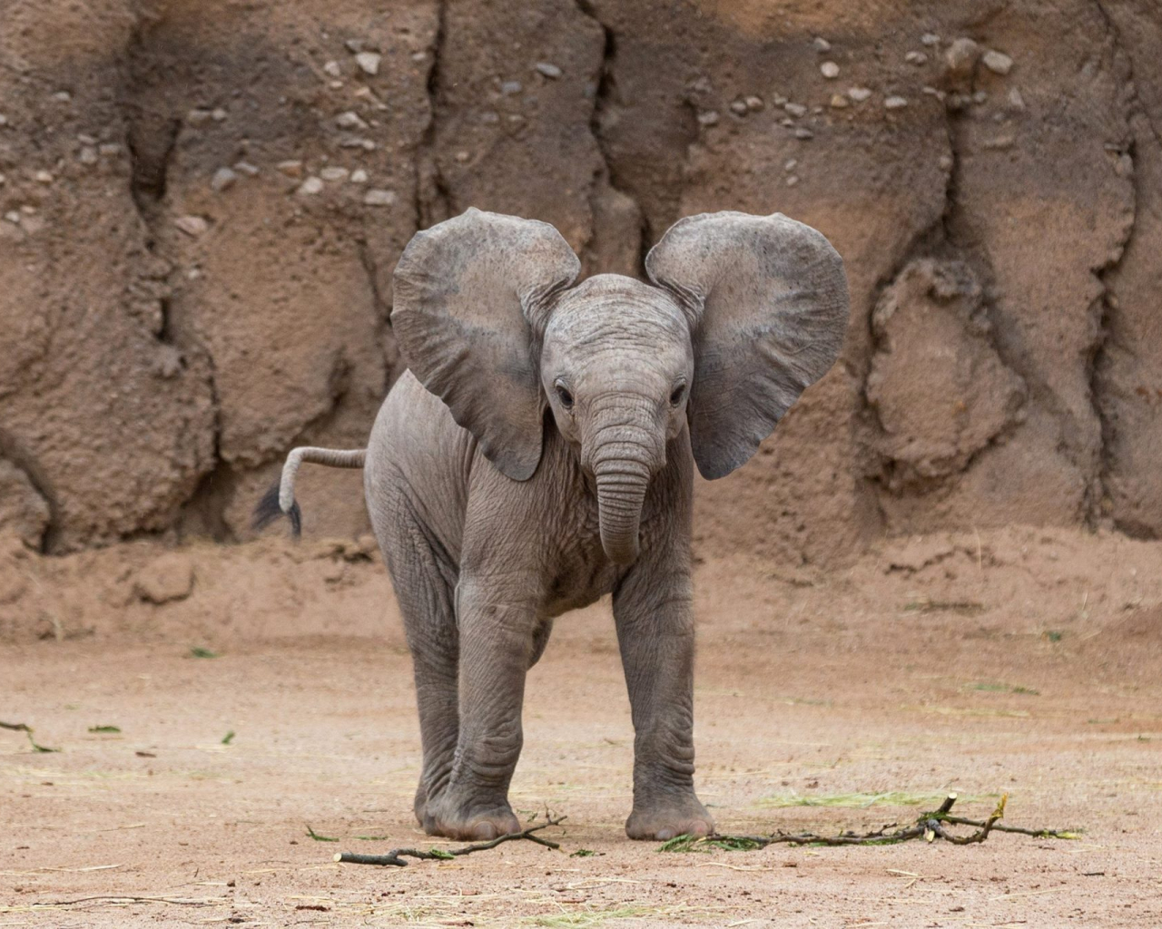 Free download Baby elephant wallpapers Baby Animals ...