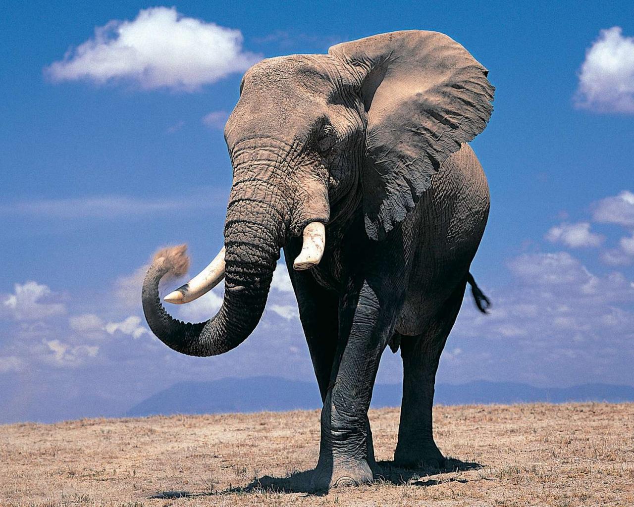 Free download Cute Elephant Wallpapers HD 10947 Wallpaper ...