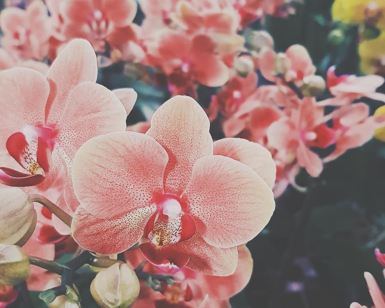 Free download Ari Rachel images aesthetic flowers HD