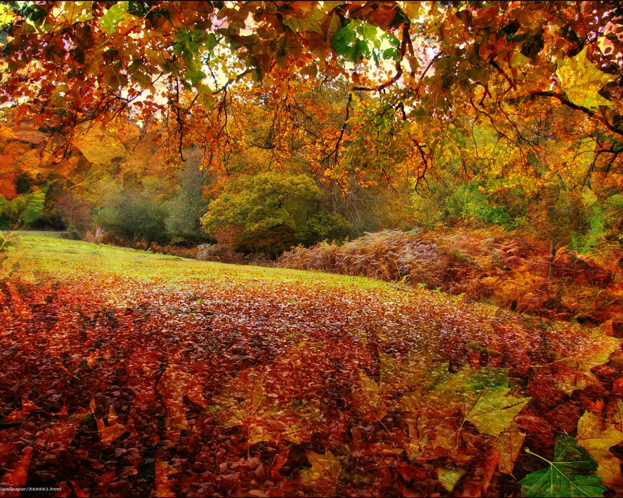 Free Download Wallpaper Autumn New Forest In Hampshire England Desktop 1600x1065 For Your Desktop Mobile Tablet Explore 41 New England Fall Desktop Wallpaper England Wallpaper For Desktop New England