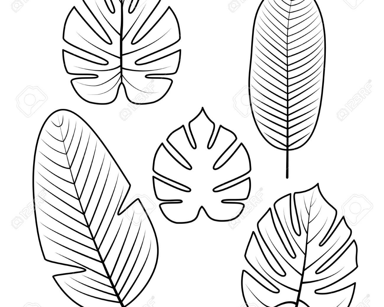 Free Download Tropical Palm Leaves Isolated On White Background Outline Vector 1300x1300 For Your Desktop Mobile Tablet Explore 53 Background Outline Background Outline Outline Of The Yellow Wallpaper The You can also click related recommendations to view more background images in our. tropical palm leaves isolated