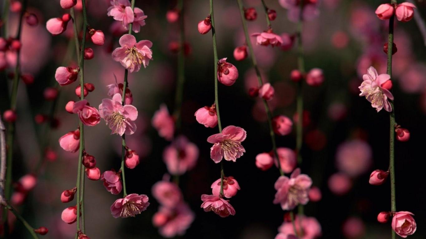 Free Download Floral Wallpapers Desktop 1440x900 4usky 1440x900