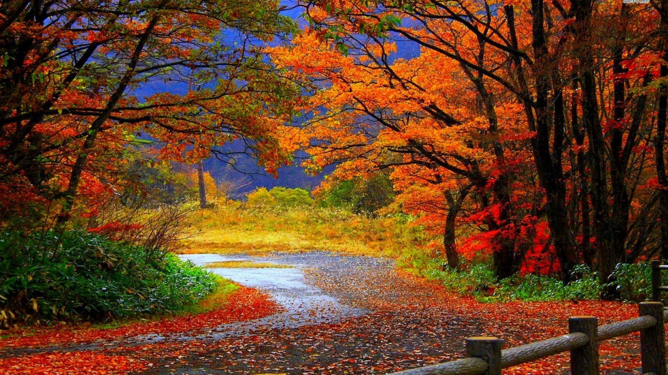 Free download Autumn Forest Road HD Wallpaper 4561 ...