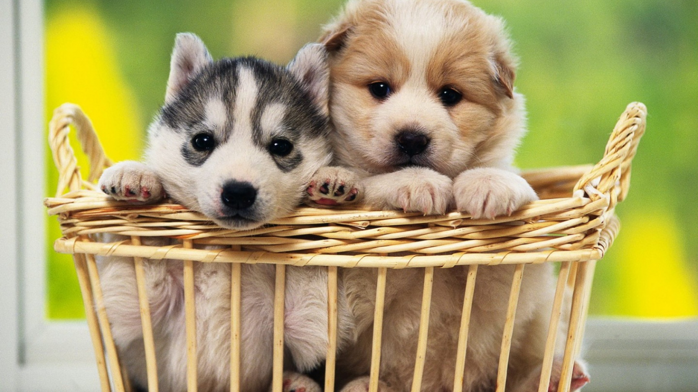 Free Download Dogs Hd Wallpapers Cute Dogs Wallpapers Hd Cute Dogs Wallpapers 1440x900 For Your Desktop Mobile Tablet Explore 49 Free Puppy Backgrounds Wallpaper Dog Wallpaper For Computer