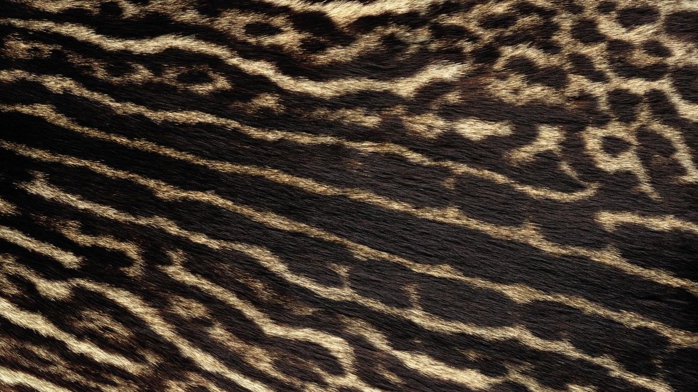 Free Download Leopard Fur Wallpaper 1366x854 For Your Desktop