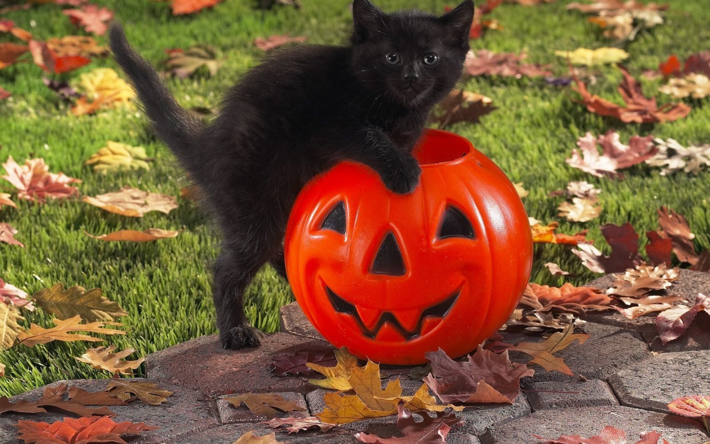 Free Download Black Cat Celebrates Halloween Wallpapers And Images Wallpapers 1600x1200 For Your Desktop Mobile Tablet Explore 34 Black Cat Halloween Wallpaper Black Cat Wallpapers Free Cute Cat Halloween