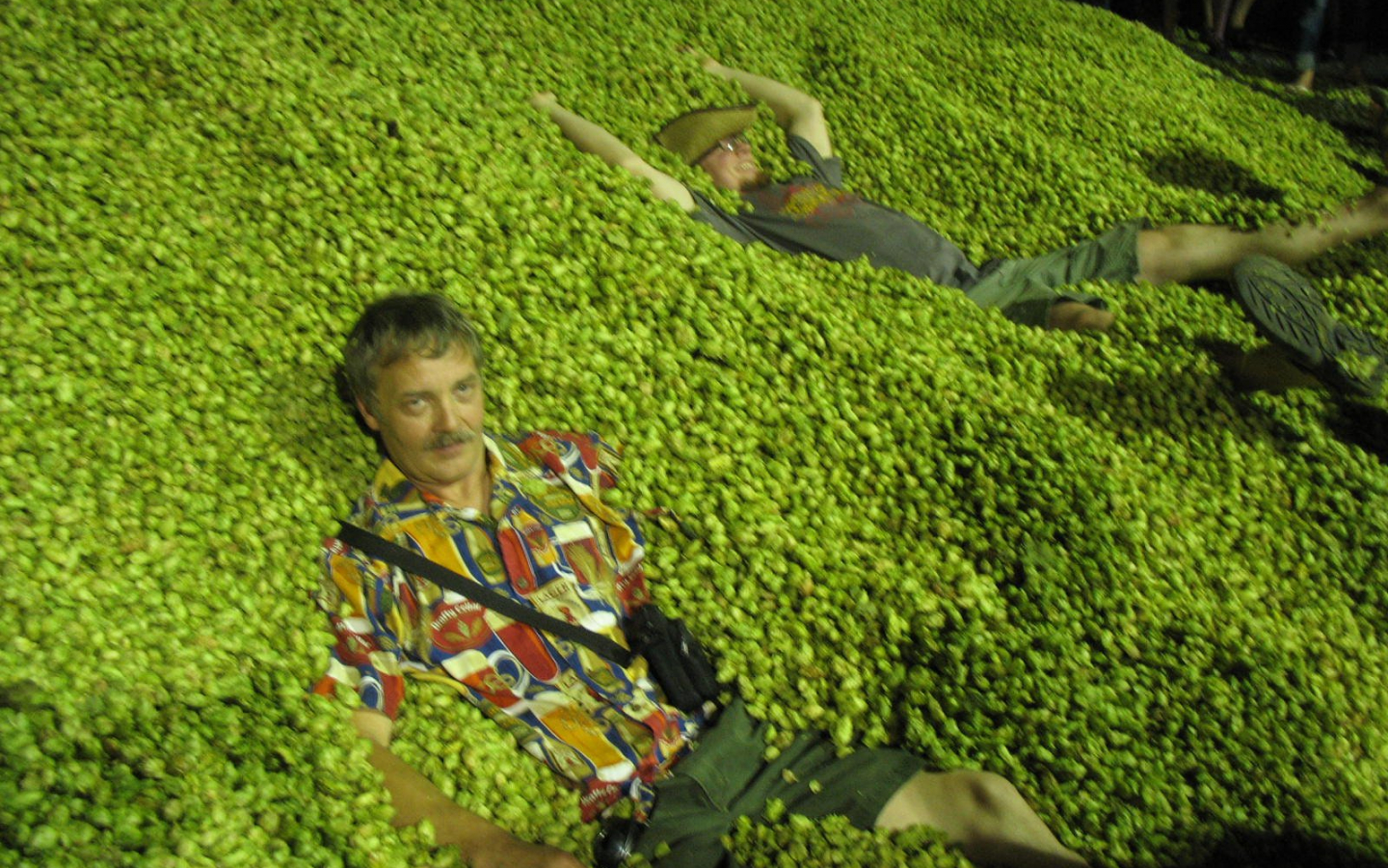 Download Hops Wallpaper Pictures 1600x1200 40 Beer Hops