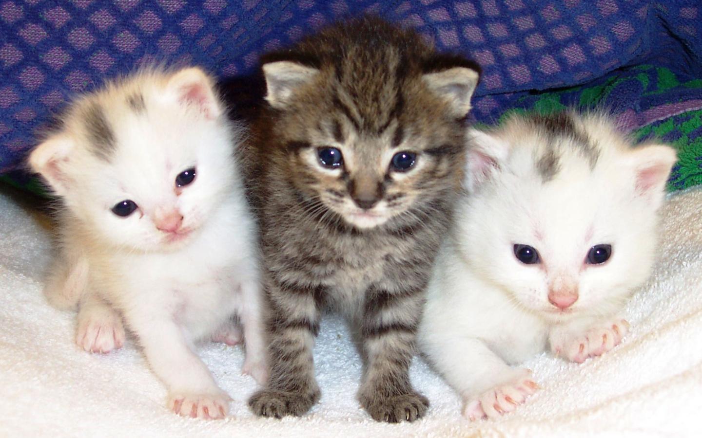 Free Download Download 1001 Gambar Foto Kucing Lucu Bergerak Aneh