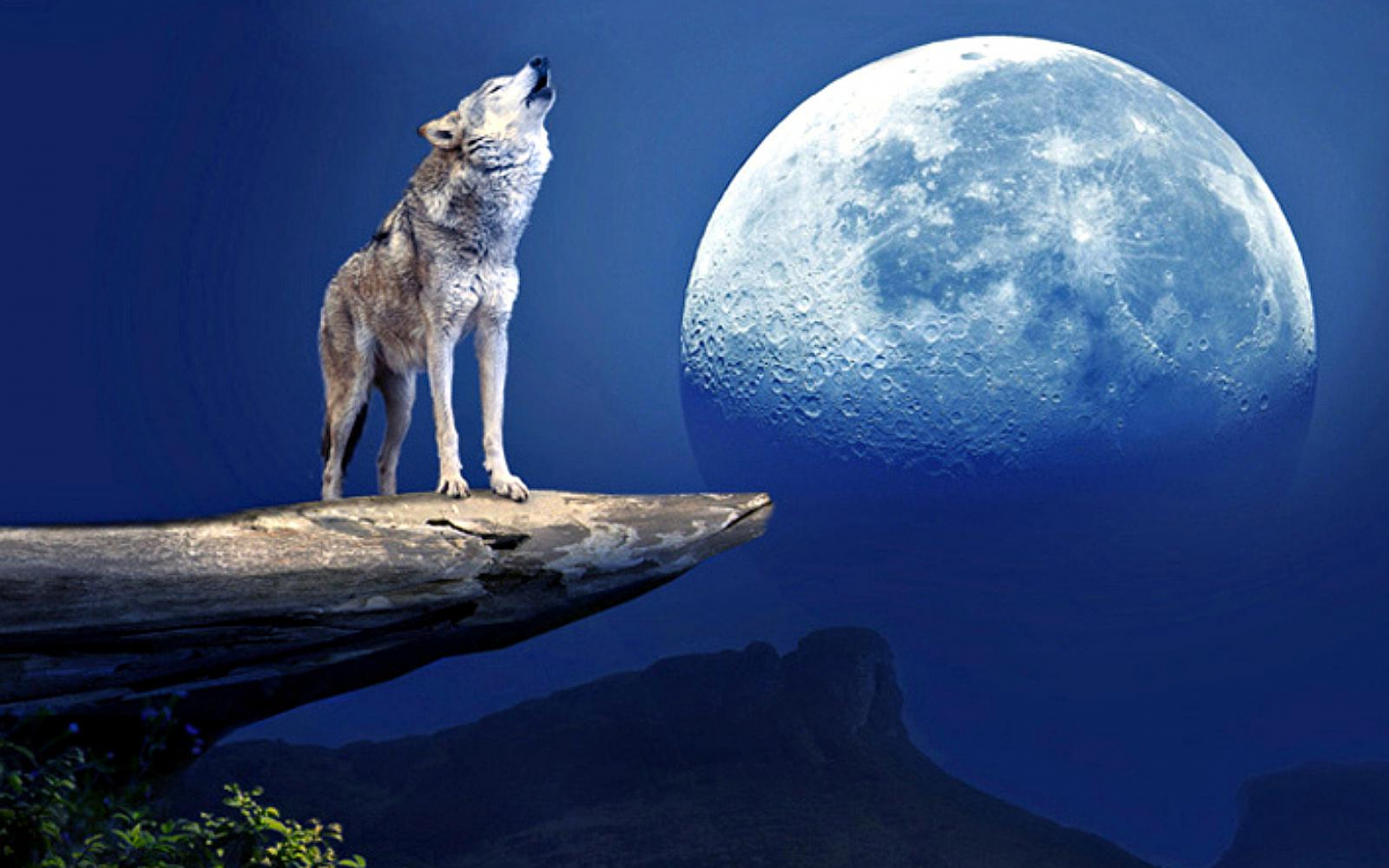 Free Download Wolf Howling At The Moon Wallpaper 125631 Hd