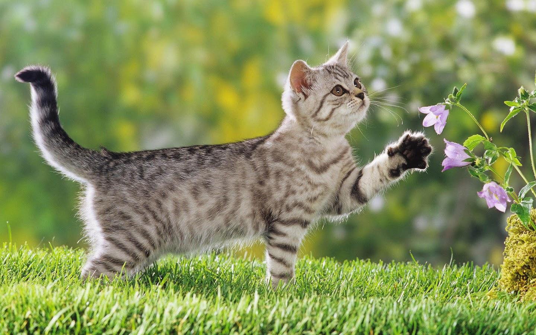 Free download Kitten achtergronden jonge katjes hd kittens wallpapers foto  1jpg [1600x900] for your Desktop, Mobile & Tablet | Explore 47+ HD Kitten  Wallpapers | Cute Kitten Wallpapers for Desktop, HD Cat