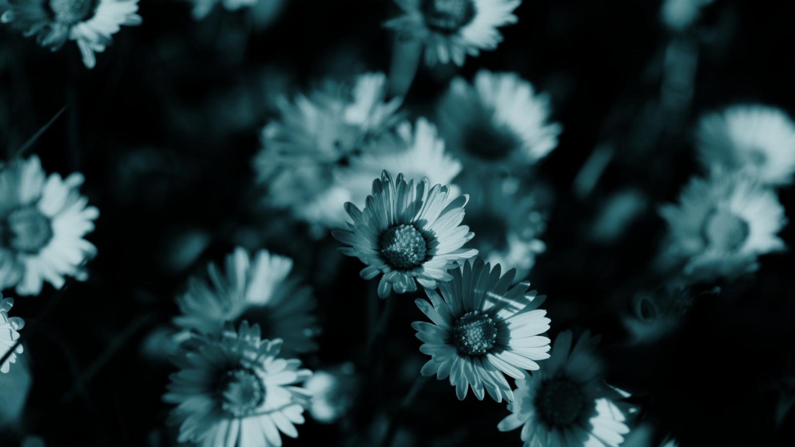 Free Download Dark Flowers Monochrome Hd Wallpaper Background