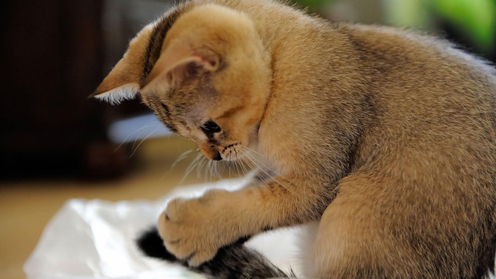 Terkeren 30 Wallpaper Kucing Lucu Imut - Kumpulan Gambar Lucu