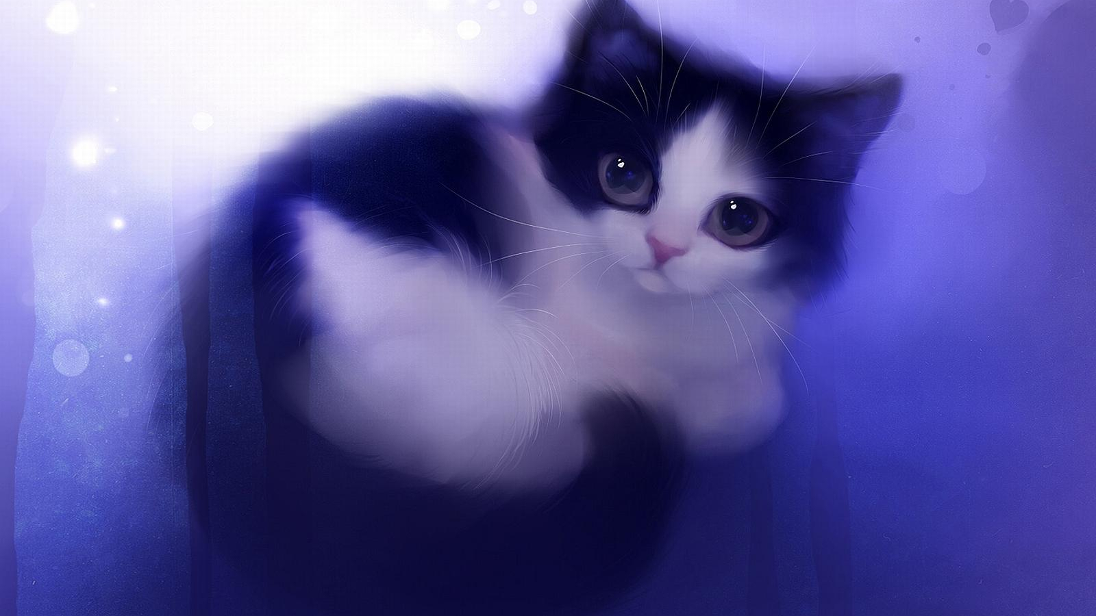 Free Download Black Xpx Cute And White Cat Wallpaper Hd Wallpapers 1600x1200 For Your Desktop Mobile Tablet Explore 65 Black And White Cat Wallpaper White Cat Wallpaper Free Black