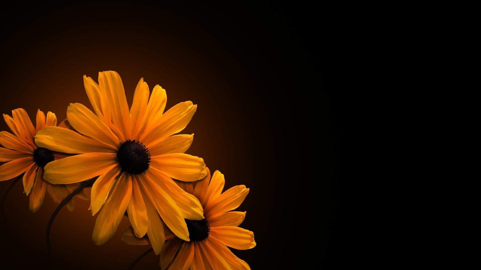 Free Download Flower On Black Background Wallpaper Hd High