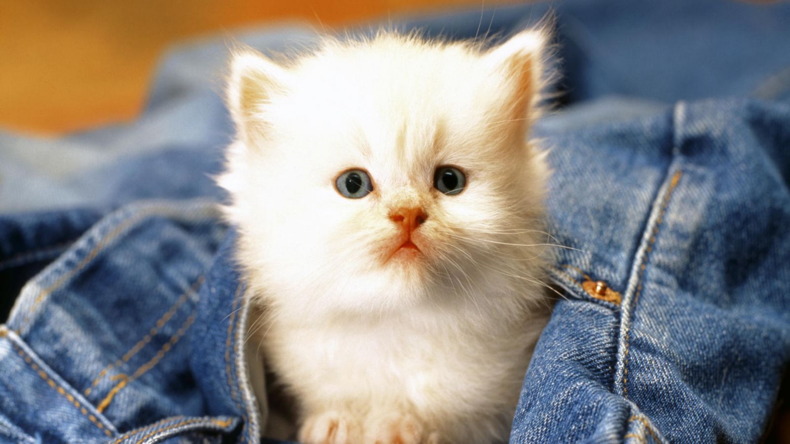 Free Download Download Cute Cat Baby In Hd And Widescreen Resolutions Wallpaper 2560x1600 For Your Desktop Mobile Tablet Explore 48 Baby Cats Wallpaper Cats Wallpaper Cute Kitten Wallpapers For