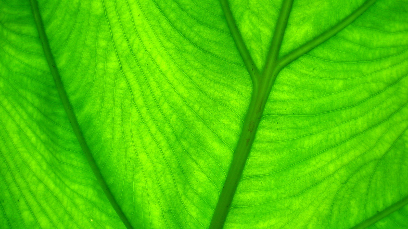 Free Download Black And White Wallpapers Green Leaf Wallpaper