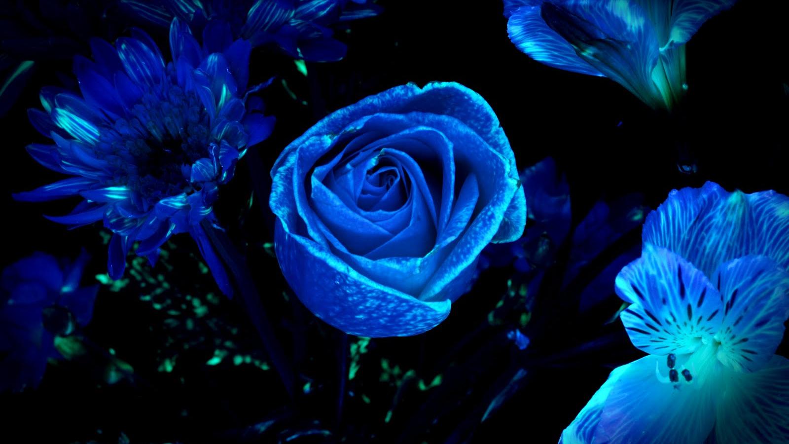 Dark Blue Floral Wallpaper Travis Draney Art And Stuff 1600x1071 Download Resolutions Desktop 1600x900