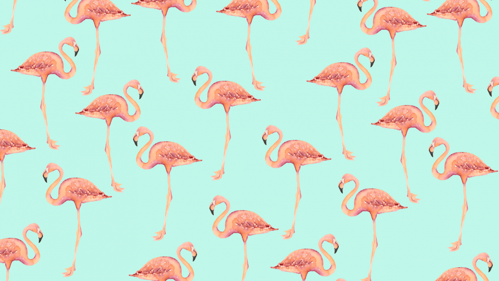 Free Download Flamingo Hd Backgrounds 1856x1161 For Your