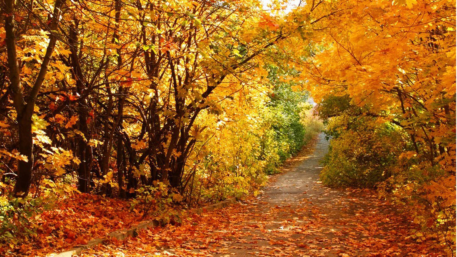 Free Autumn Scenery Wallpapers Beautiful Autumn