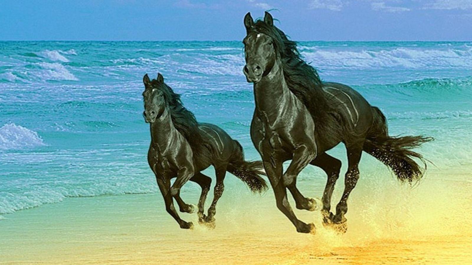 Free Download Walking Wallpaper Black Colourful Horse Wallpaper