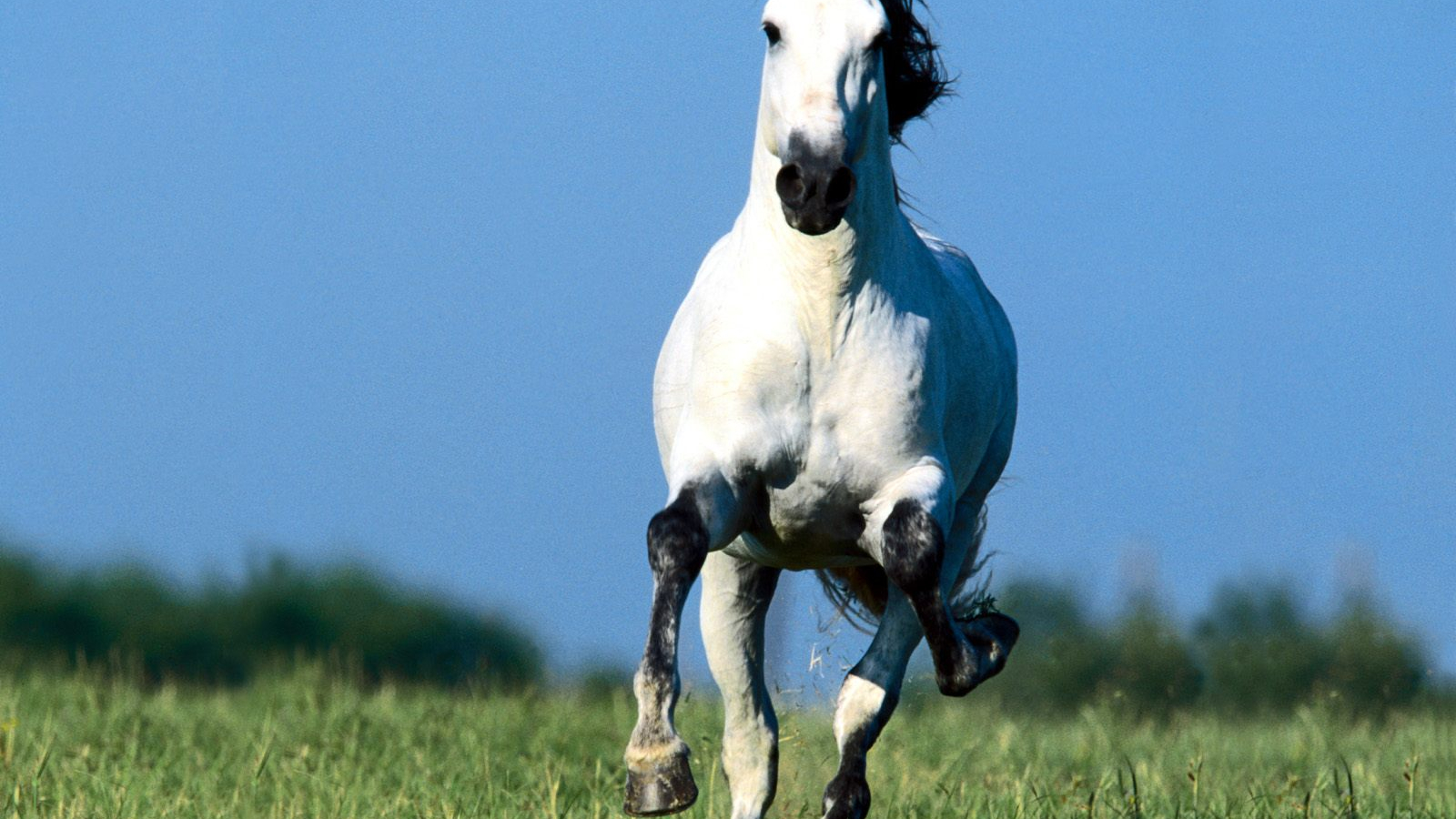 Free Download Running Horse Wallpapers White Horses Running
