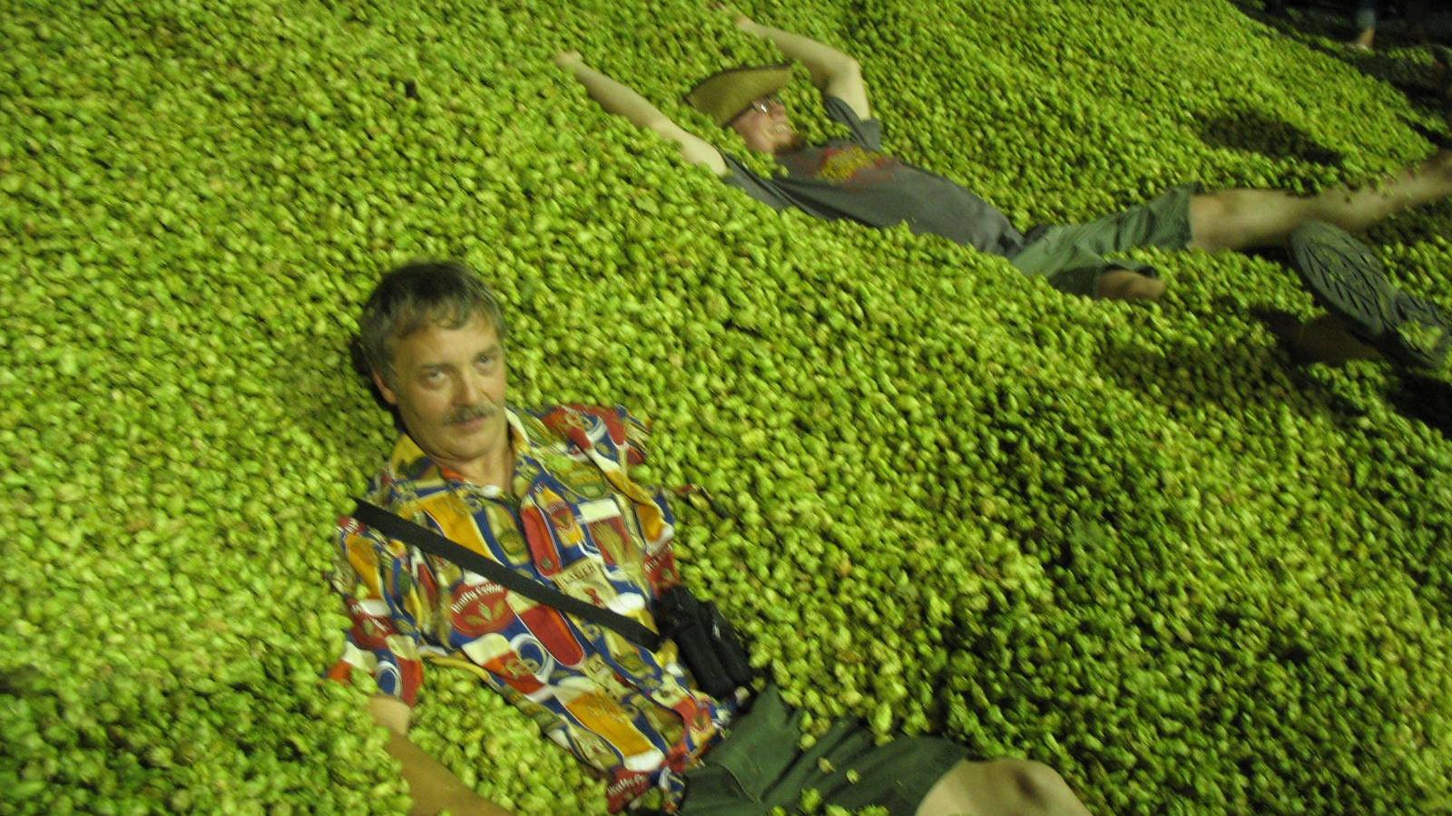 Download Hops Wallpaper Pictures 1600x1200 40 Beer Hops