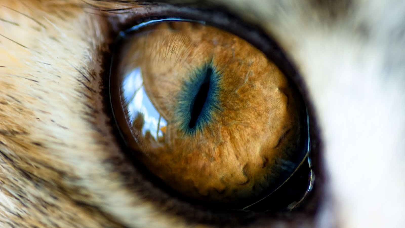 Free Download Wallpapers Animal Eye Of The Tiger 1600x1000 For
