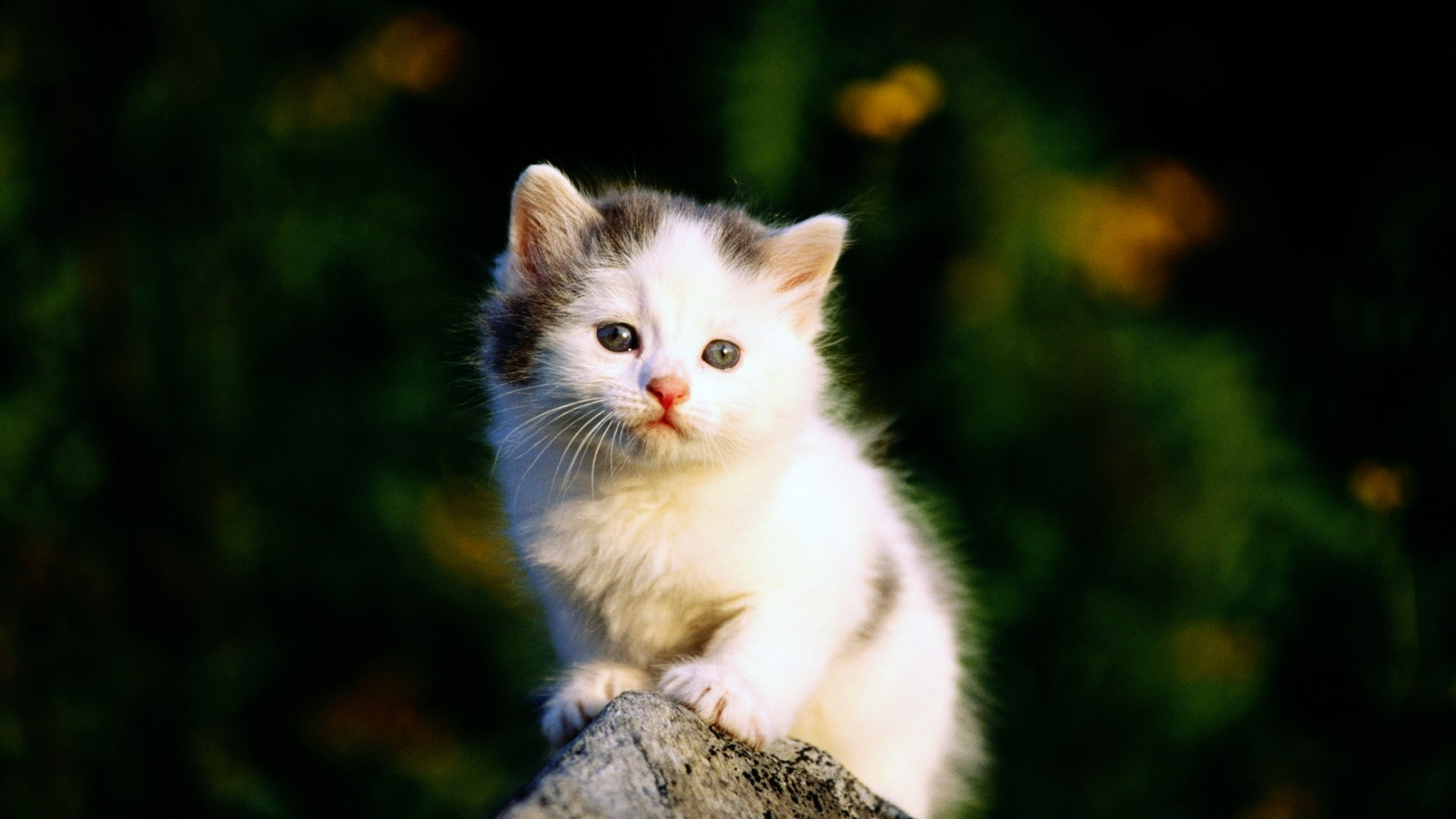 Free Download Beautiful Cute And Sweet Cat Wallpapers Are Waiting For Your To 1920x1080 For Your Desktop Mobile Tablet Explore 77 Cat Backgrounds Kitten Desktop Wallpaper Cute Cats Wallpaper