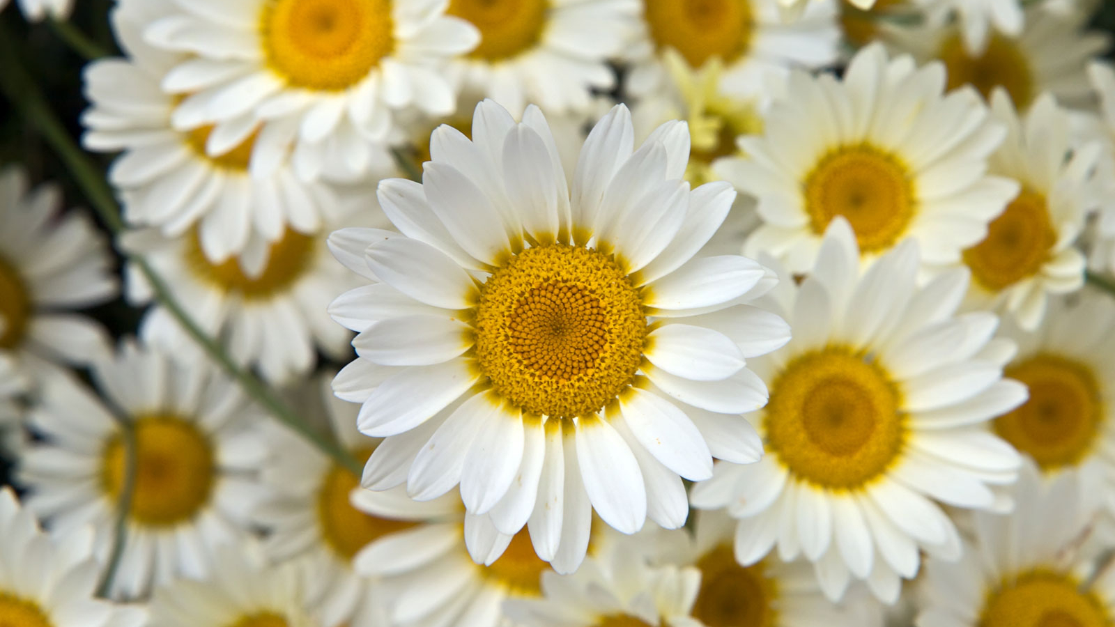 Flower Background Tumblr Wallpaper Hd Desktop 1600x1200 Download Resolutions 1600x900