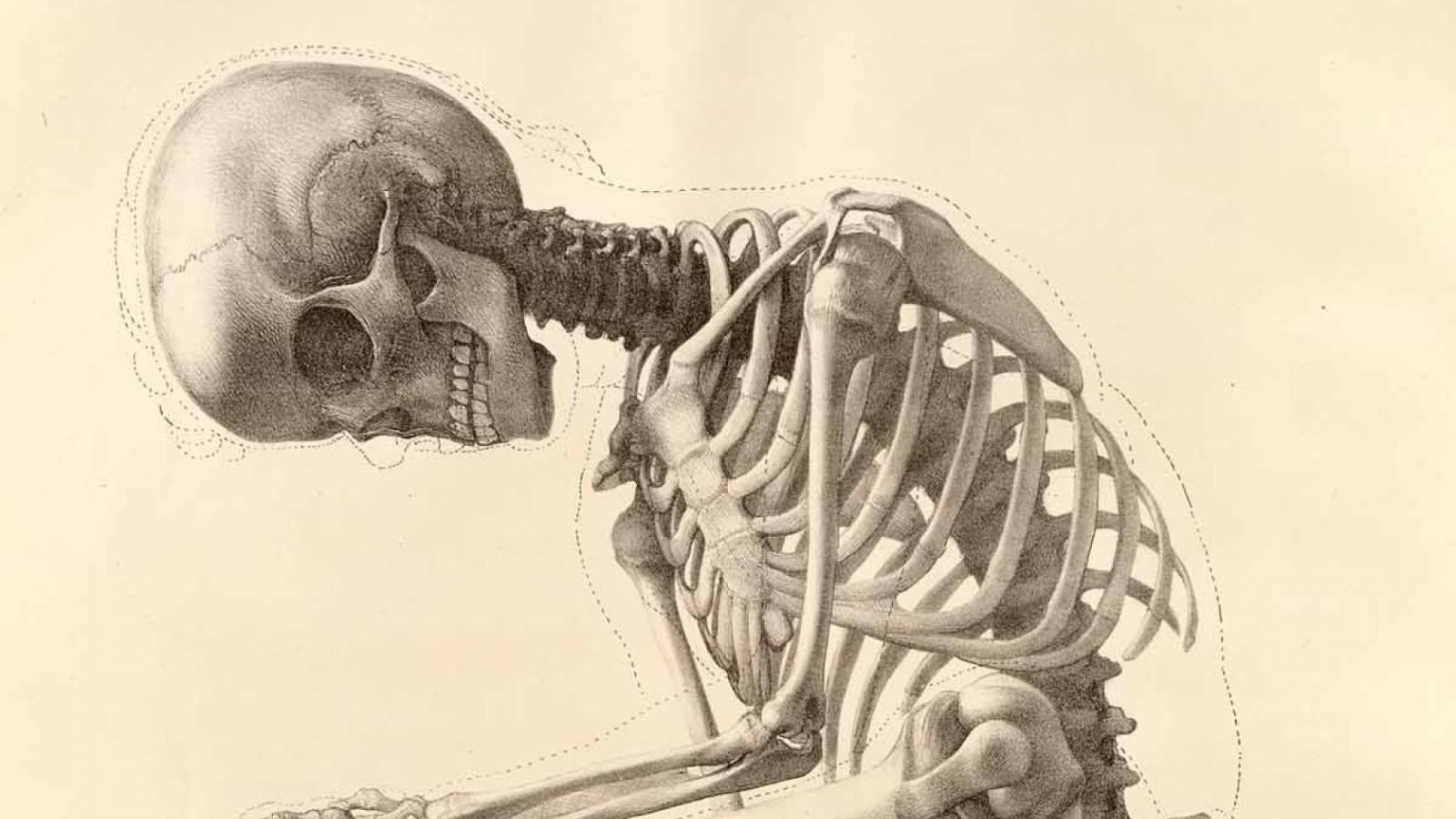 Free Download Skeleton Human Body Art Anatomy Bones 1200x1642 Wallpaper Wallpaper 1680x1050 For Your Desktop Mobile Tablet Explore 47 Human Anatomy Wallpaper Heart Wallpapers For Desktop Human Body Wallpaper