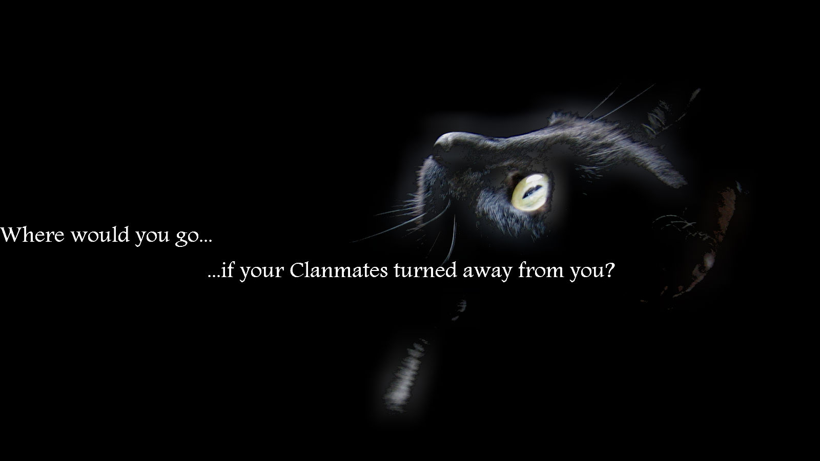 Free download Image Black Cat EarthClan wallpaperjpg Warrior