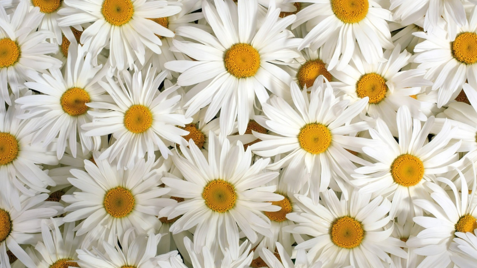 Free download Pretty Flower Wallpapers
