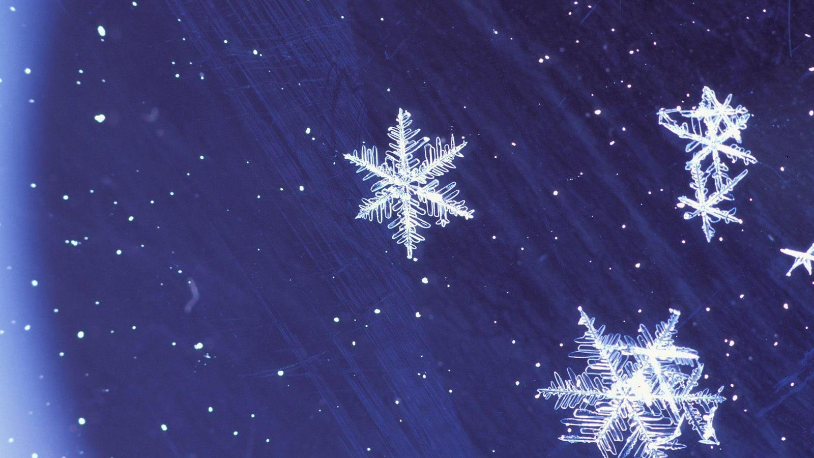 Free Download Animated Christmas Wallpaper Christmas Wallpaper For
