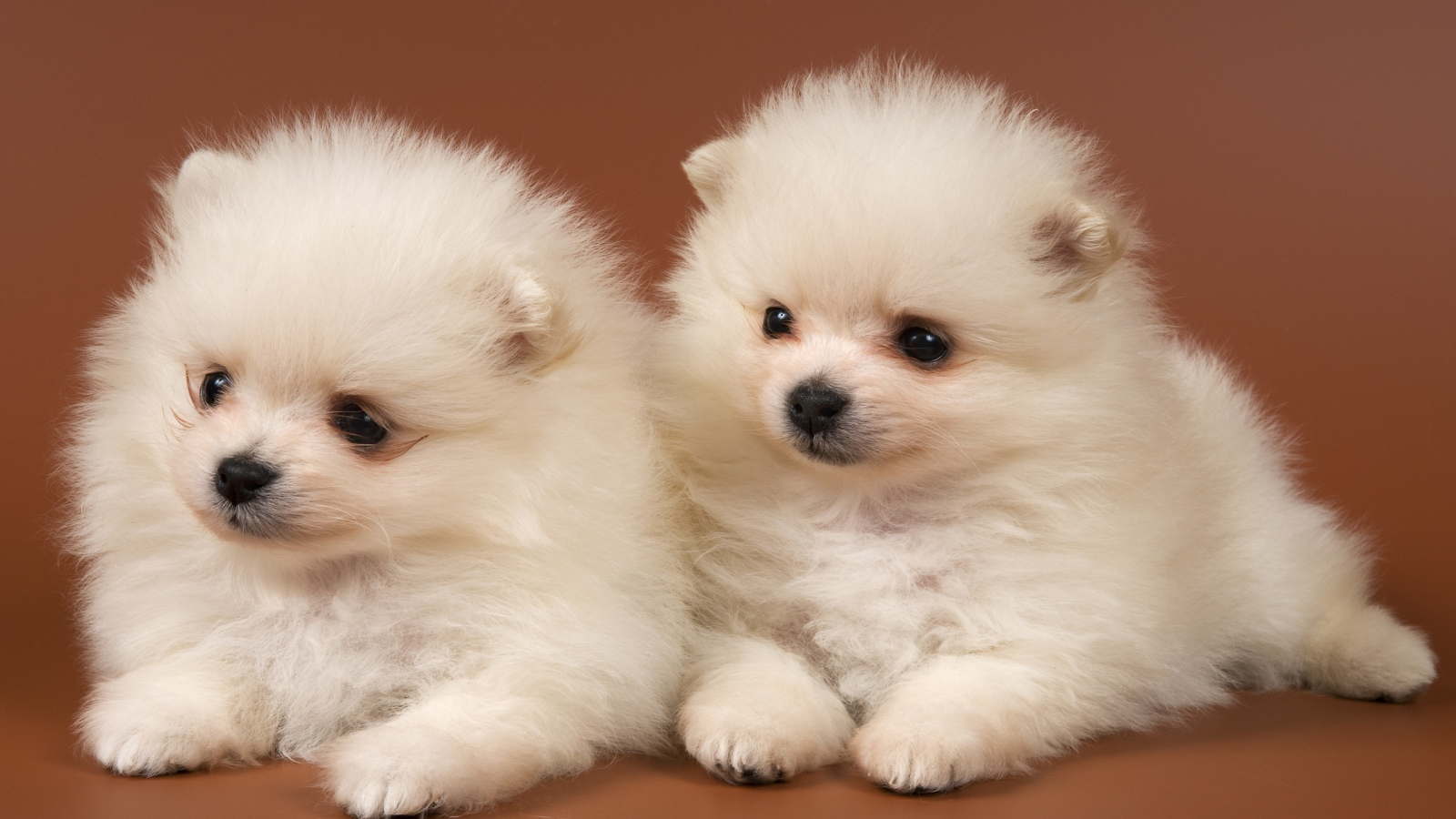 Free Download Baby Puppies Dog Very Cute Wallpaper 5575 Wallpaper Hdwallsizecom 2560x1600 For Your Desktop Mobile Tablet Explore 72 Baby Dog Wallpaper Cute Puppies Wallpapers Cute Cats And Dogs