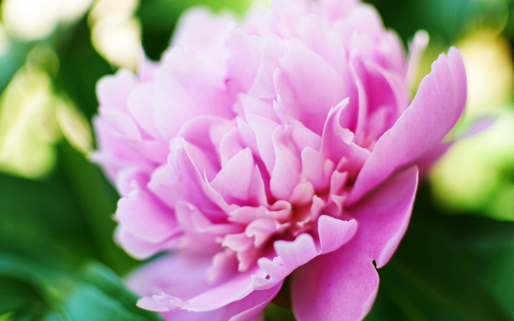 Flowers Screensavers 4k Wiki Wallpapers 2018