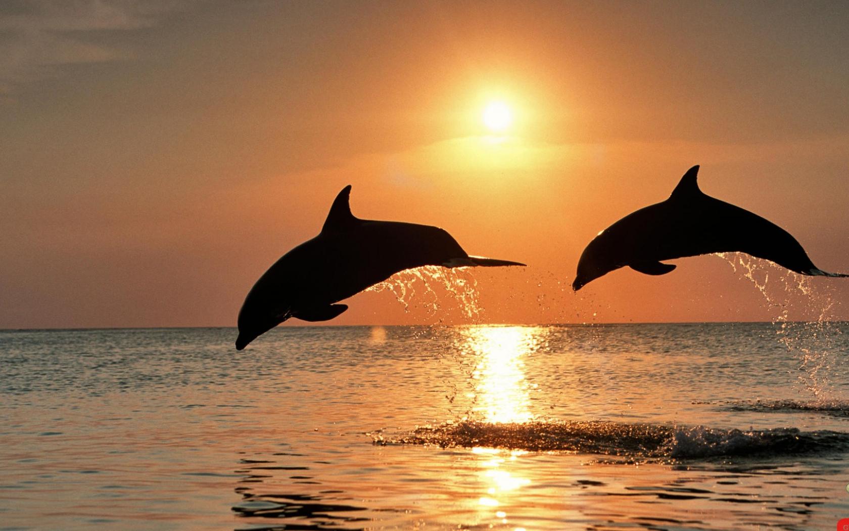 Free Download Wallpapers Cute Ocean Beautiful Desktop Backgrounds