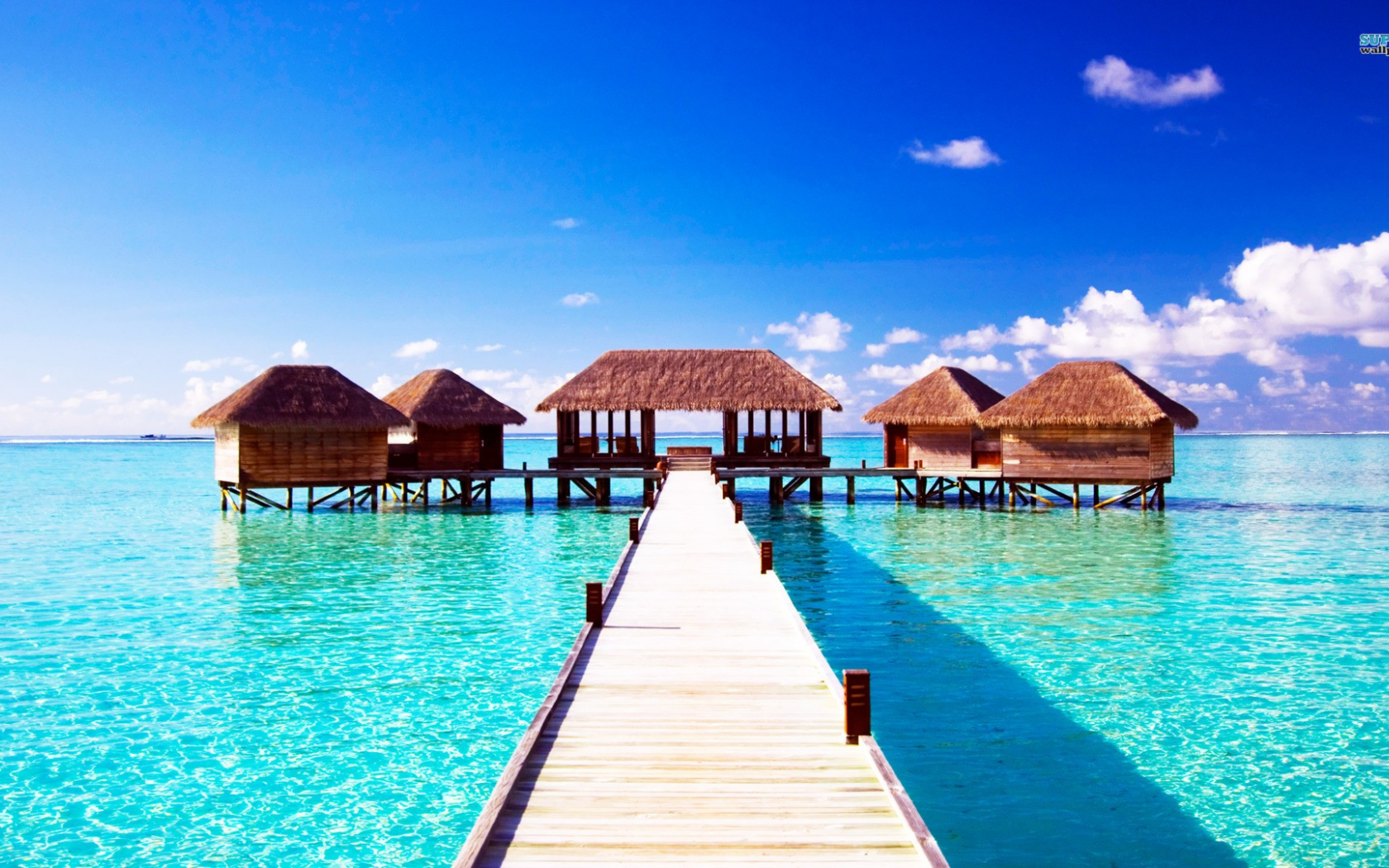 Free Download Wallpapers Beach Bar Bums 1920x1080 For Your