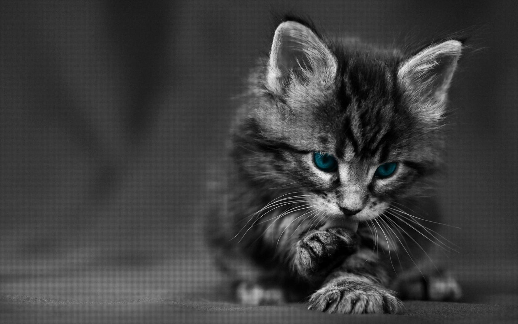 Free Download Cute Black Cat Hd Desktop Wallpaper Hd Desktop Wallpaper 1920x1080 For Your Desktop Mobile Tablet Explore 43 Cute Black Cat Wallpaper Cute Cats Wallpaper Black Cat Wallpaper