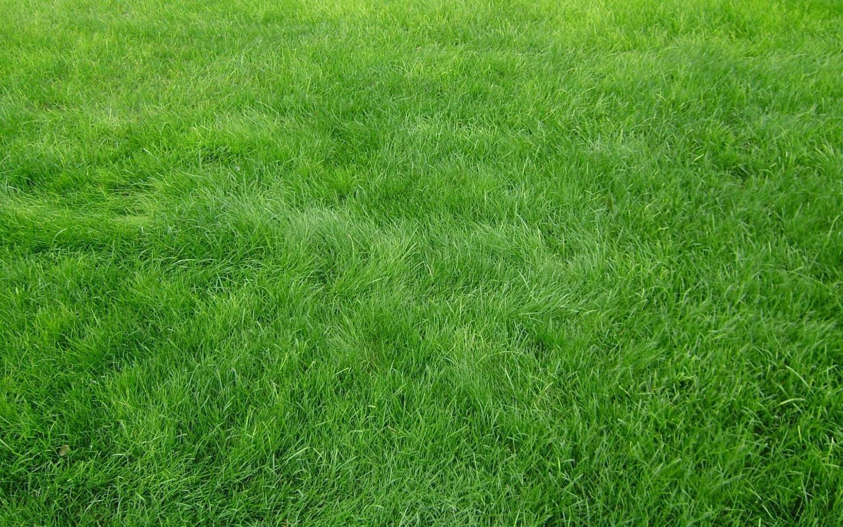 Free Download Wallpaper Grain Grass Field Green Hd Wallpaper 1080p