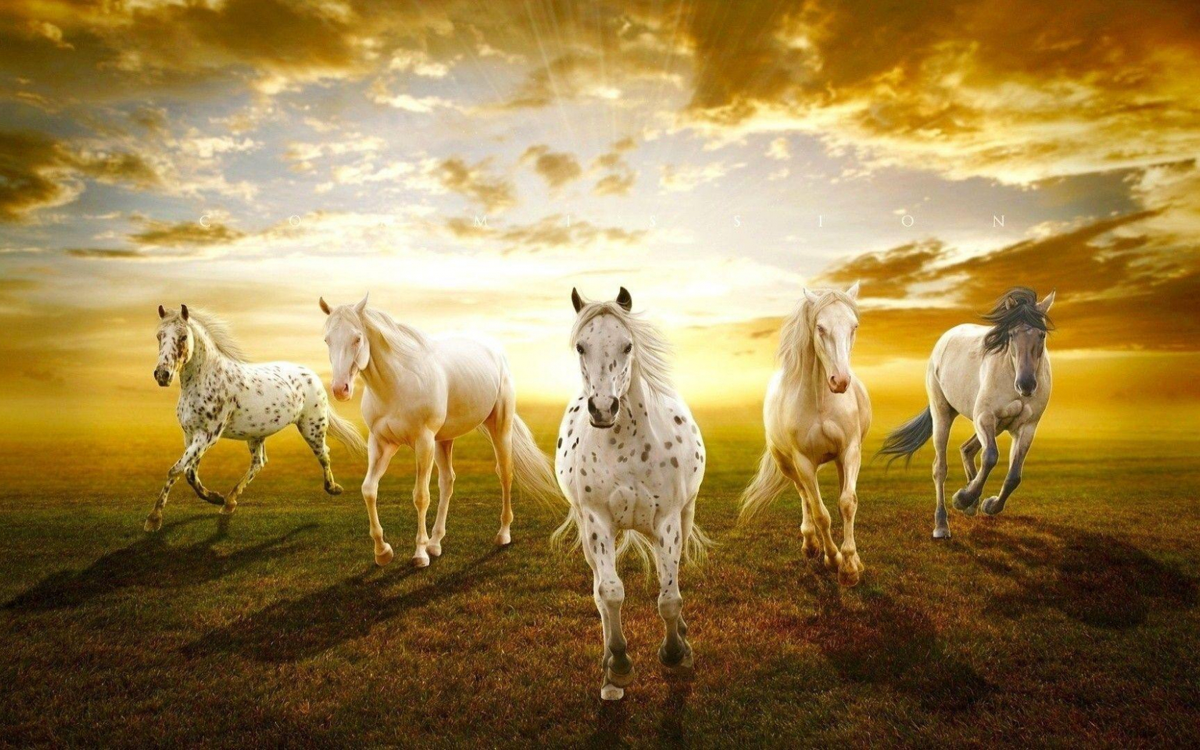 Free Download Seven Horses Wallpaper 7 For Android Apk Download