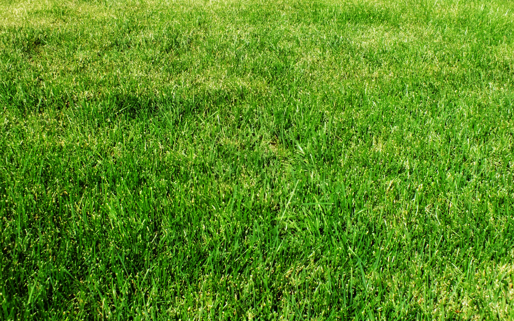 Free Download Grass Wallpaper 1080p By Sansnoir 1920x1080 For