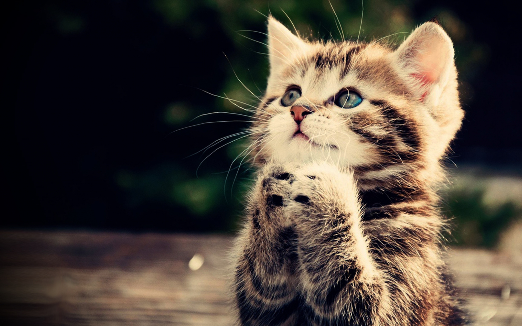 Free Download Praying Kitten Full Hd Wallpaper Cute Animal Picture 1080p Download 1920x1080 For Your Desktop Mobile Tablet Explore 48 Hd Cat Wallpapers Full Hd Wallpapers 1920x1080 3d Hd