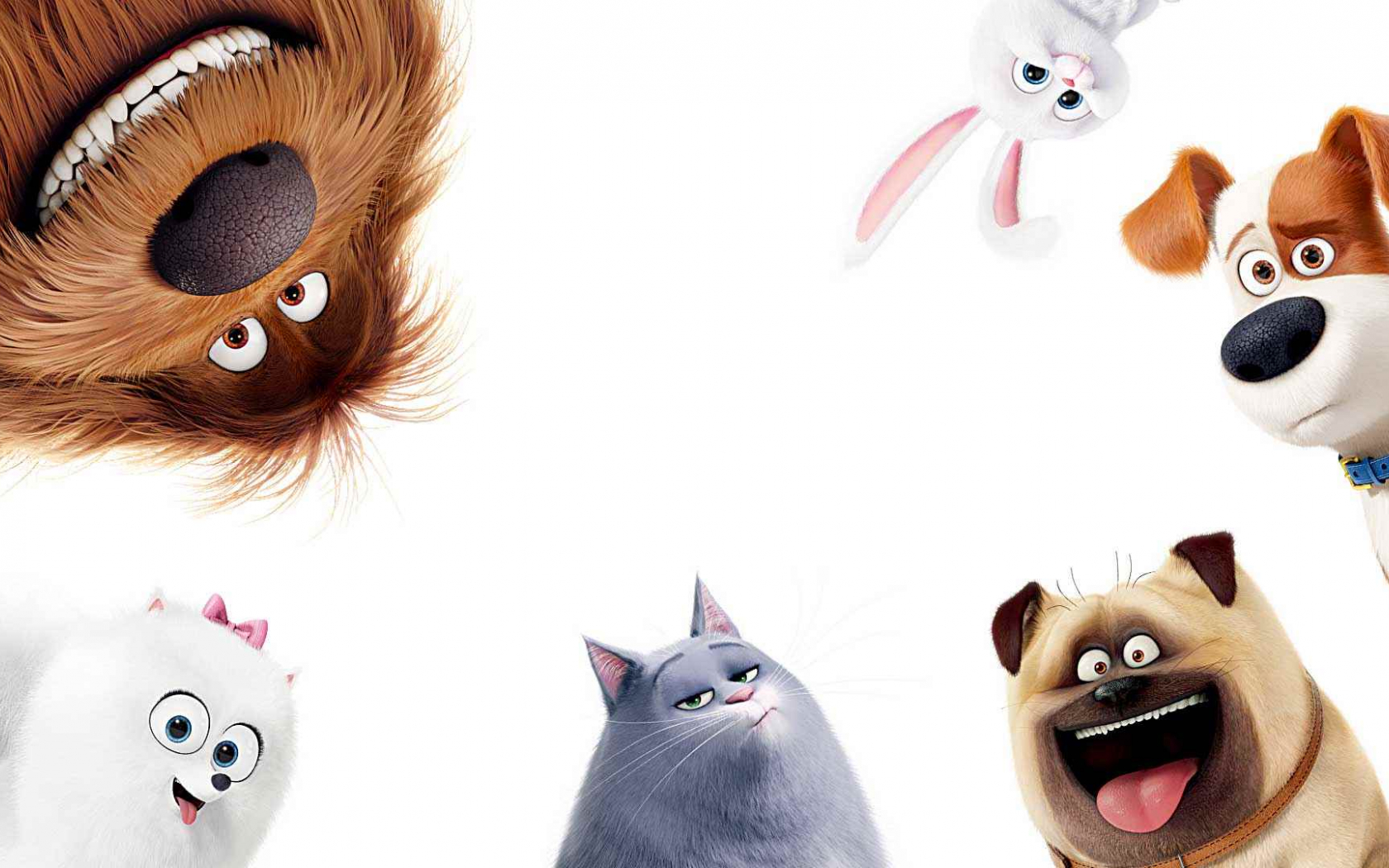 Free Download The Secret Life Of Pets Wallpapers And Background