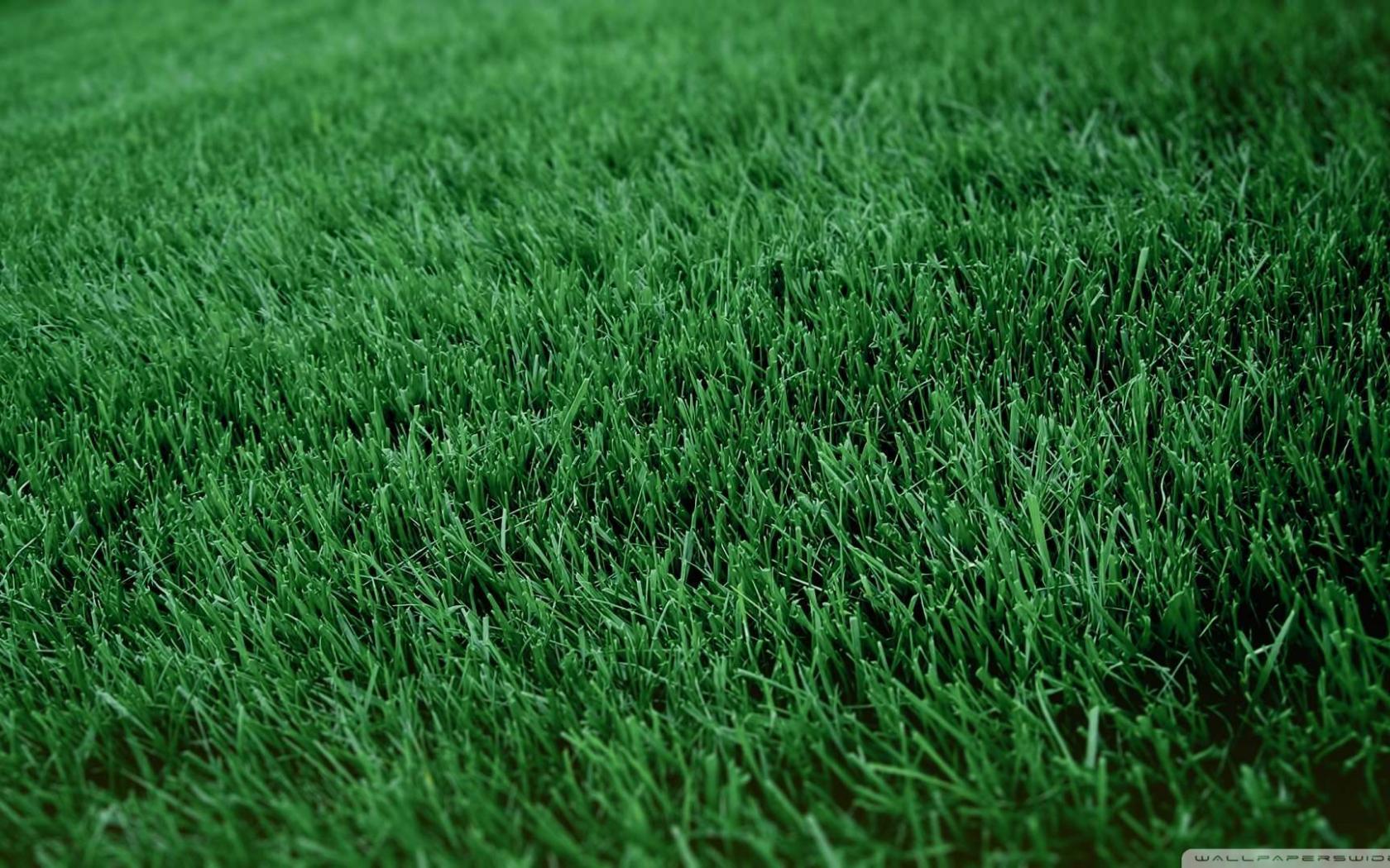Free Download Wallpaper Fresh Cut Grass Wallpaper 1080p Hd Upload